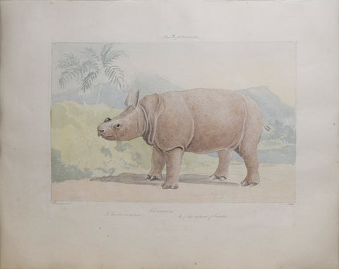 Charles Hamilton Smith (1776-1859), Rhinoceros of the Island of Sunda