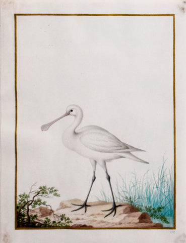 Nicolas Robert (French, 1614-1685), Jeune Spatule Blanche (Young Spoonbill)