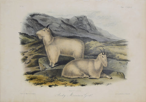 John James Audubon (1785-1851) & John Woodhouse Audubon (1812-1862),  Rocky Mountain Goats Pl. CXXVIII