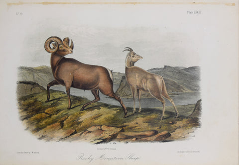 John James Audubon (1785-1851) & John Woodhouse Audubon (1812-1862), Rocky Mountain Sheep Pl. LXXIII