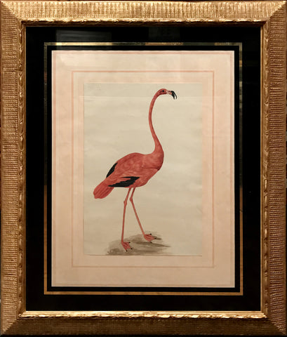 Sarah Stone (British, c. 1760-1844), Flamingo