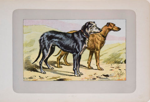 P. Mahler & J.B. Samat, Scottish Deerhound