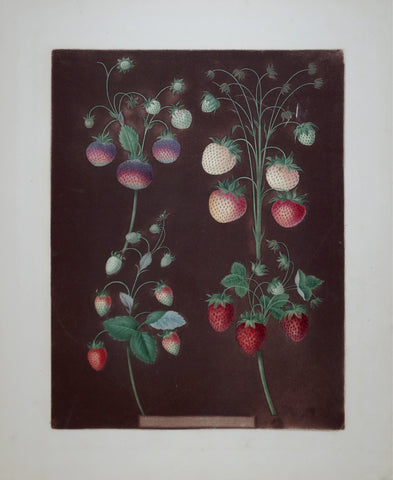 George Brookshaw (1751-1823), Strawberries