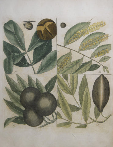 Mark Catesby (ca. 1679-1749), T 17,18, 20,21,22