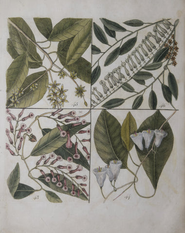 Mark Catesby (ca. 1679-1749), T 43, 44, 45, 46