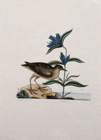 Mark Catesby (1683-1749), T 70-The Soree