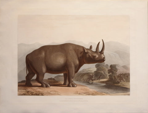 Samuel Daniell (1775-1811), The African Rhinoceros