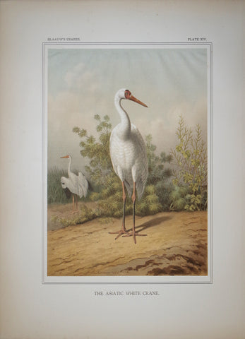 Frans Ernst Blaauw (1860-1936), The Asiatic White Crane