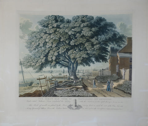 George Lehman (C. 1830-1870), The Great Elm Tree of the Shackamaxon Now Kensington…