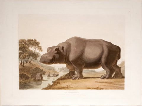 Samuel Daniell (1775-1811), The Hippopotamus and The African Rhinoceros