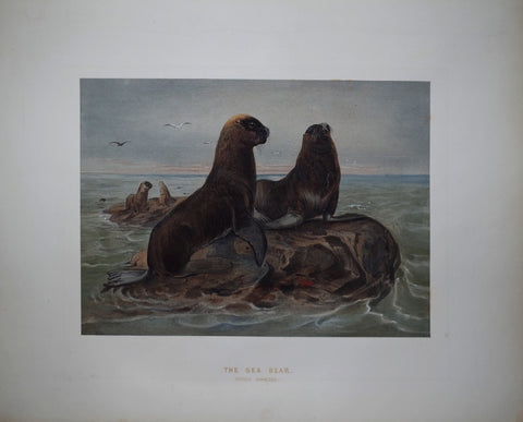 Joseph Wolf (1820-1899), The Sea Bear
