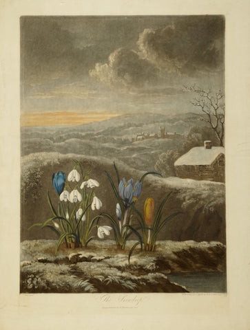 Robert John Thornton (1768-1837), The Snowdrop