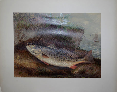Samuel A. Kilbourne (1836-1881), The Weakfish