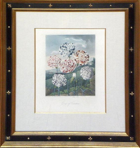 Robert John Thornton (1768-1837), Group of Carnations