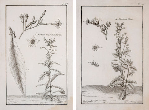 Francois Alexandre Garsault (1691-1778), A. Nicotiana Major angustifolia, Pl. 408 & A. Nicotiana minor, Pl. 409  [Tobacco Plants]