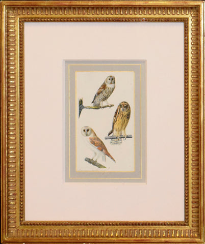 Edouard Traviès (French, 1809-1876), Eurasian Tawny Owl, Short Eared Owl, Barn Owl