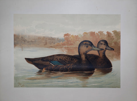 Alexander Pope, Jr. (1849-1924), Two Ducks in Water