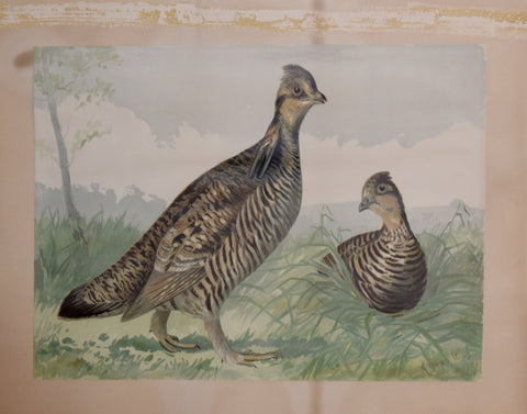 Alexander Pope, Jr. (1849-1924), Two Quail