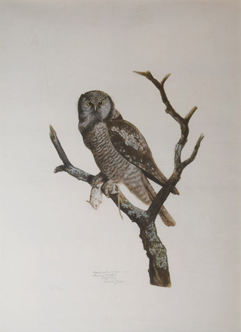 Carroll Sargent Tyson (1877-1956), Hawk Owl with Field Mouse