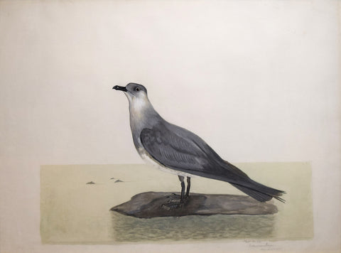 Carroll Sargent Tyson (1878-1956), The Shearwater (Richardsons Jaeger)