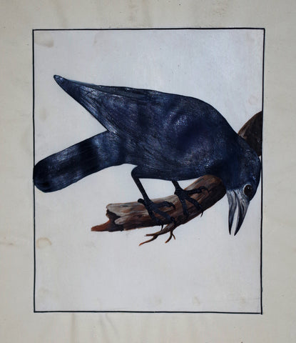 William Lewin (1747-1795), Untitled (Bent Crow)