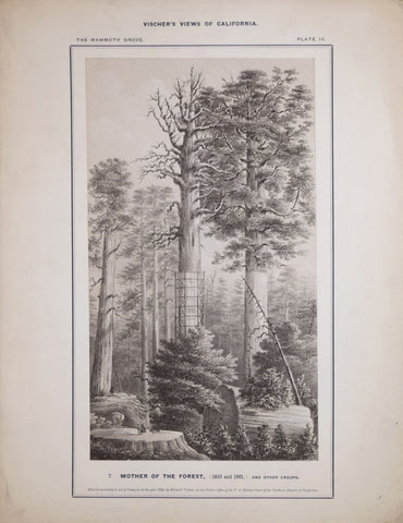Edward Vischer (1809-1878), Mother of the Forest, (1855 and 1861) and other Groups, Plate IV