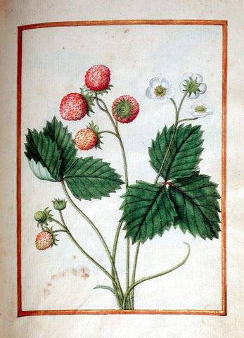 Jacques le Moyne de Morgues (French, ca. 1533-1588), Wild Strawberry