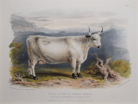 David Low (1786-1859), The Wild or White Forest Breed