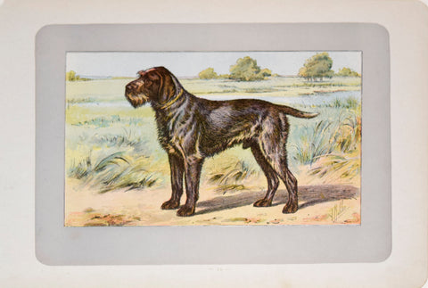 P. Mahler & J.B. Samat, Wirehaired Pointing Griffon