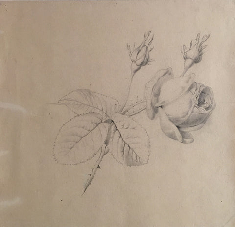 Pancrace Bessa (French, 1772-1846), Blooming Rose with Two Buds