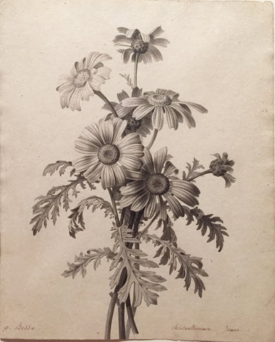 Pancrace Bessa (French, 1772-1846), Chrysanthemums
