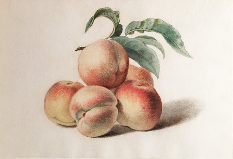 Pancrace Bessa (French, 1772-1846), Peaches