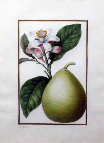Pancrace Bessa (French, 1772-1846), Pear and Floral Study