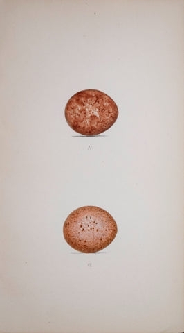 Henry Leonard Meyer (1797-1865), Kestril and Merlin Eggs
