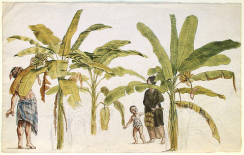 Jan Brandes (Dutch, 1743-1808), Slaves with Banana Trees, Java