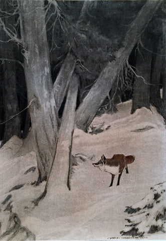 Charles Livingston Bull (American, 1874-1932), [Red Fox]
