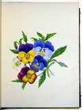 Priscilla Susan Bury (British, 1799–1872), Fine Original Album of Botanical Watercolors