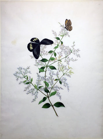 CANTONESE SCHOOL (19TH-CENTURY) [Two Butterflies on a Flowering Branch]