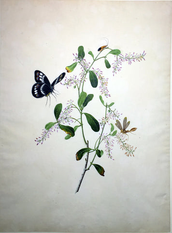 CANTONESE SCHOOL (19TH-CENTURY) [Butterfly and Insect with Purple Flowering Branch]
