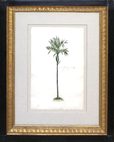Daniel Carthidge, Pymah (Palm) Tree