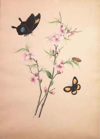 Chinese School (19th century) [Apple Blossom with Two Butterflies and a Beetle]