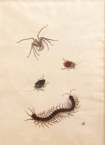 Chinese School (19th century) [Spider, Two Beetles, Centipede, and Bee]