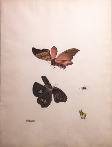 Chinese School (19th century) [A Caterpillar, Three Butterflies, and a Spider]