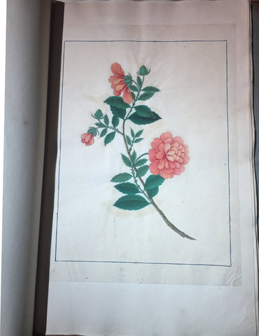 CHINESE SCHOOL (18TH-CENTURY), A Fine Album of Botanical Watercolors 18th-century