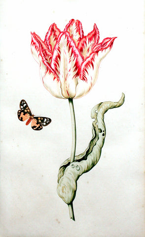 School of Anthony Claesz II (Dutch, 1607-1649), Study of a tulip and a butterfly