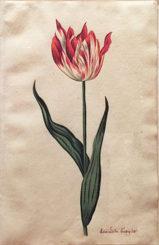 School of Anthony Claesz II (Dutch, 1607-1649), Tulip Study, Brandon birgin