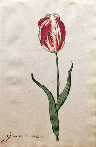 School of Anthony Claesz II (Dutch, 1607-1649), Tulip Study, Gonvads van soudych