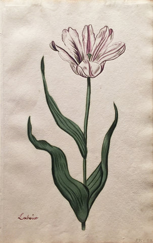 School of Anthony Claesz II (Dutch, 1607-1649), Tulip Study, Lafoisr