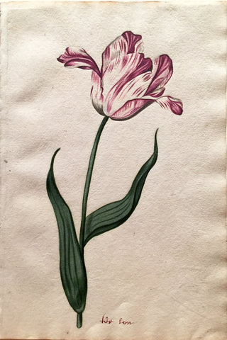 School of Anthony Claesz II (Dutch, 1607-1649), Tulip Study, fost son