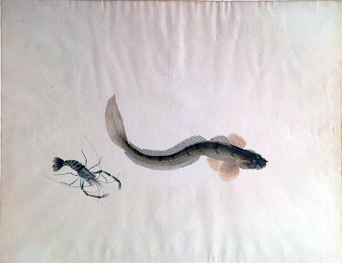Company School (19th century) [Eel and Lobster]